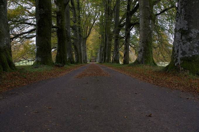 Beech avenue at Drummond Castle. If youre name is Drummond, this place has meaning for you.