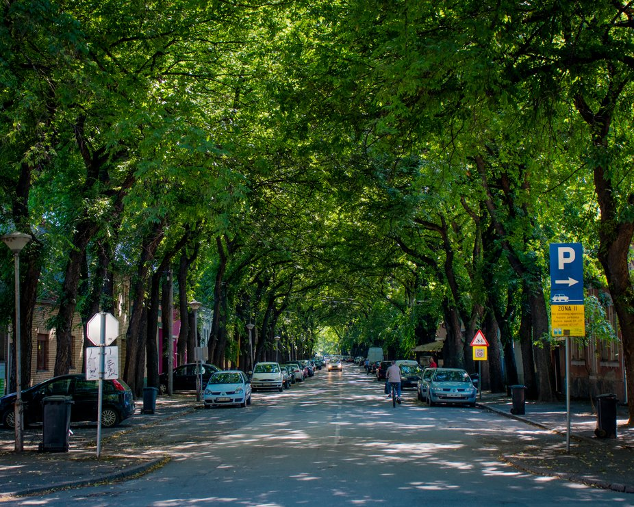 This is one of the famous streets in my hometown! Rated in top 20 on some websites.. Really beaut...
