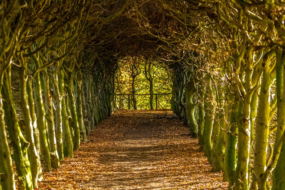 Tree tunnel covered with fallen leaves