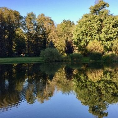 Reflections on a Pond