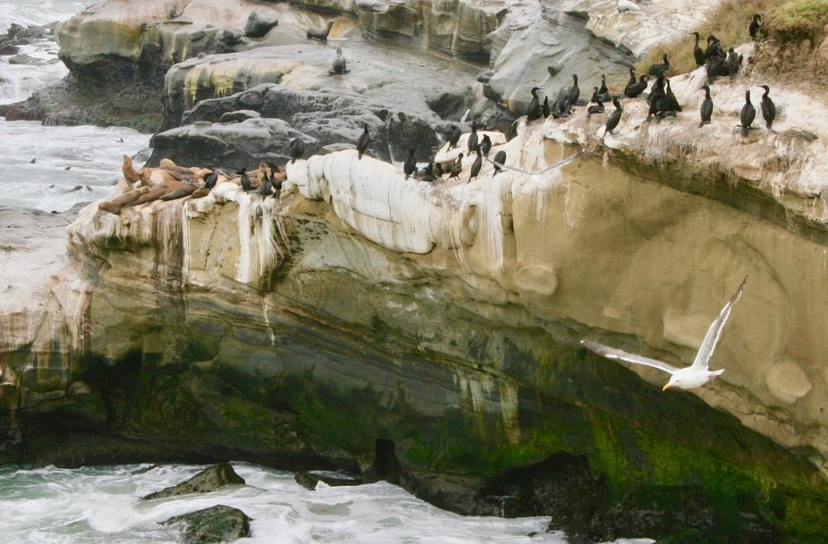 Birds and Seals on a Cliff