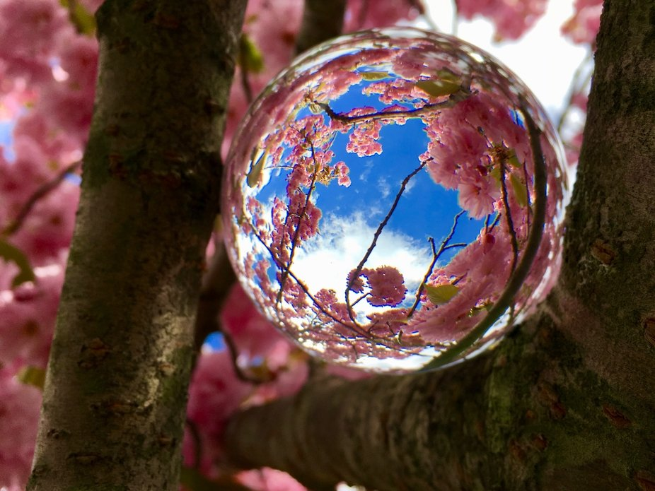 The limbs of this tree cradles the crystal perfectly.   I love the springtime blossoms.