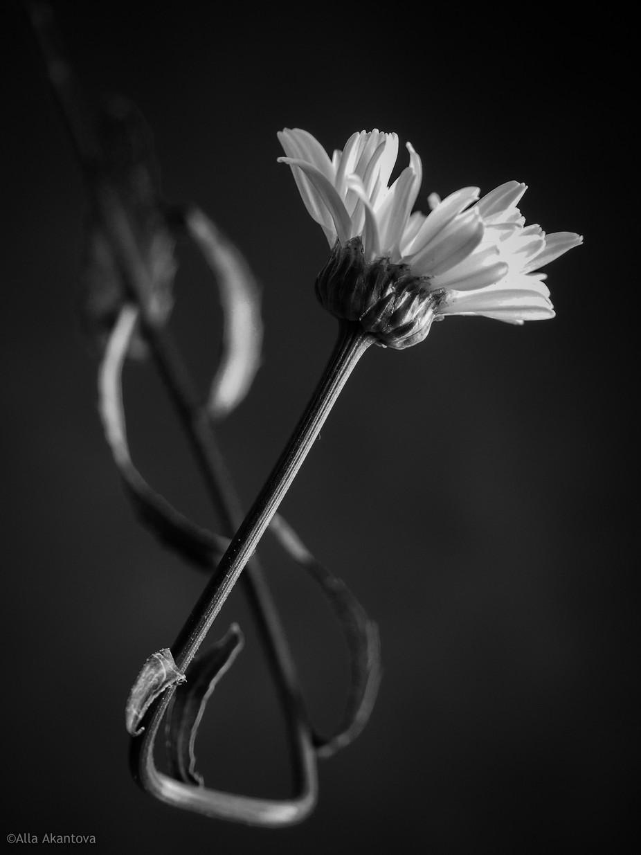 Flower Space. Eternity