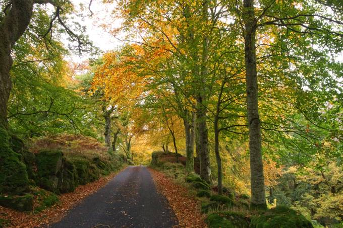 The drive to Drummond Castle
