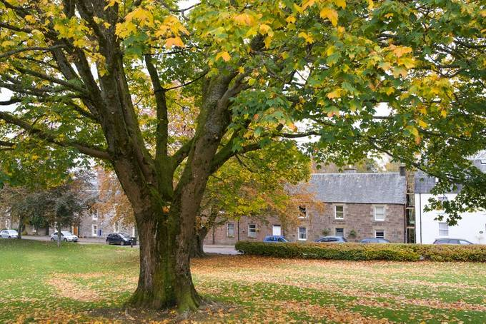 Autumn in Muthill