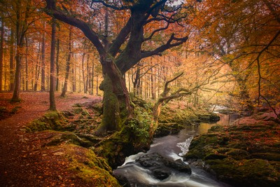 Tollymore Autumn
