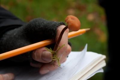 Fungi recording