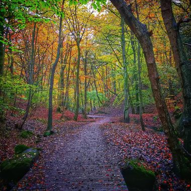 Wooded scene in autumn following a path through a gorge