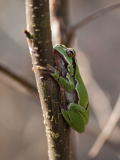 Small froggy