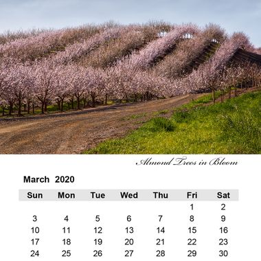March 2020 Almond Trees in Bloom
