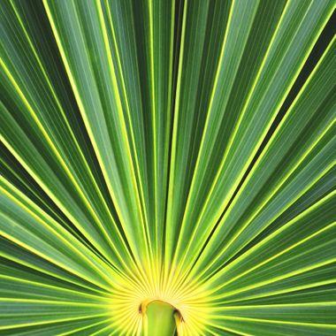 Palm leaf, Isla Holbox, Quintana Roo, México