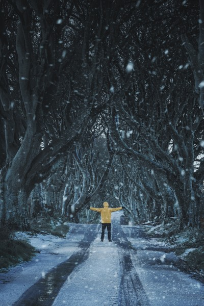 Alone in the dark hedges