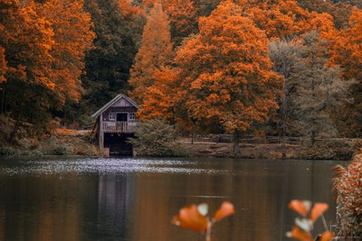 Boathouse in the forest