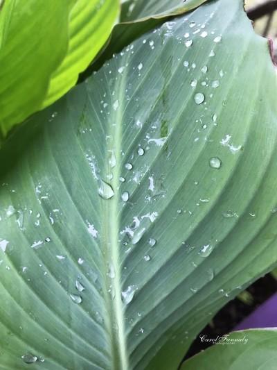 Tears of a Leaf