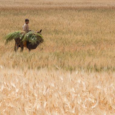 Niño marroqui de la zona del Atlas,regresando al pueblocon productos del zoco (mercado)
