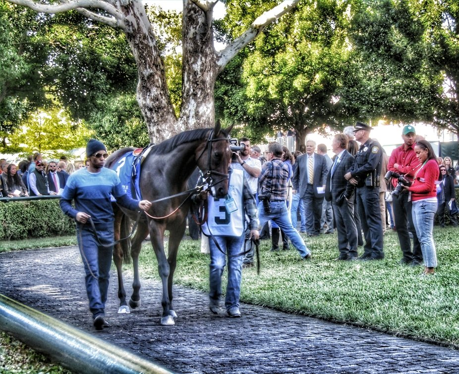 The ancient Sycamore tree at the entrance of the Keeneland Saddling Paddock is something of a lan...