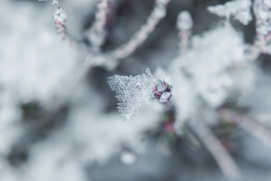 The details in a snowflake are simply amazing to look at, it's mesmerizing. Look at the ...