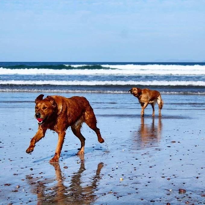 #autohash #Killorglin #Ireland #CountyKerry #water #beach #sea #dog #doglife #doglove #dogsofinsta #seashore #summer #sand #outdoors #ocean #mammal #travel #traveling #visiting #instatravel #instago #vacation #nature #sky #landscape #animal #daylight #canine