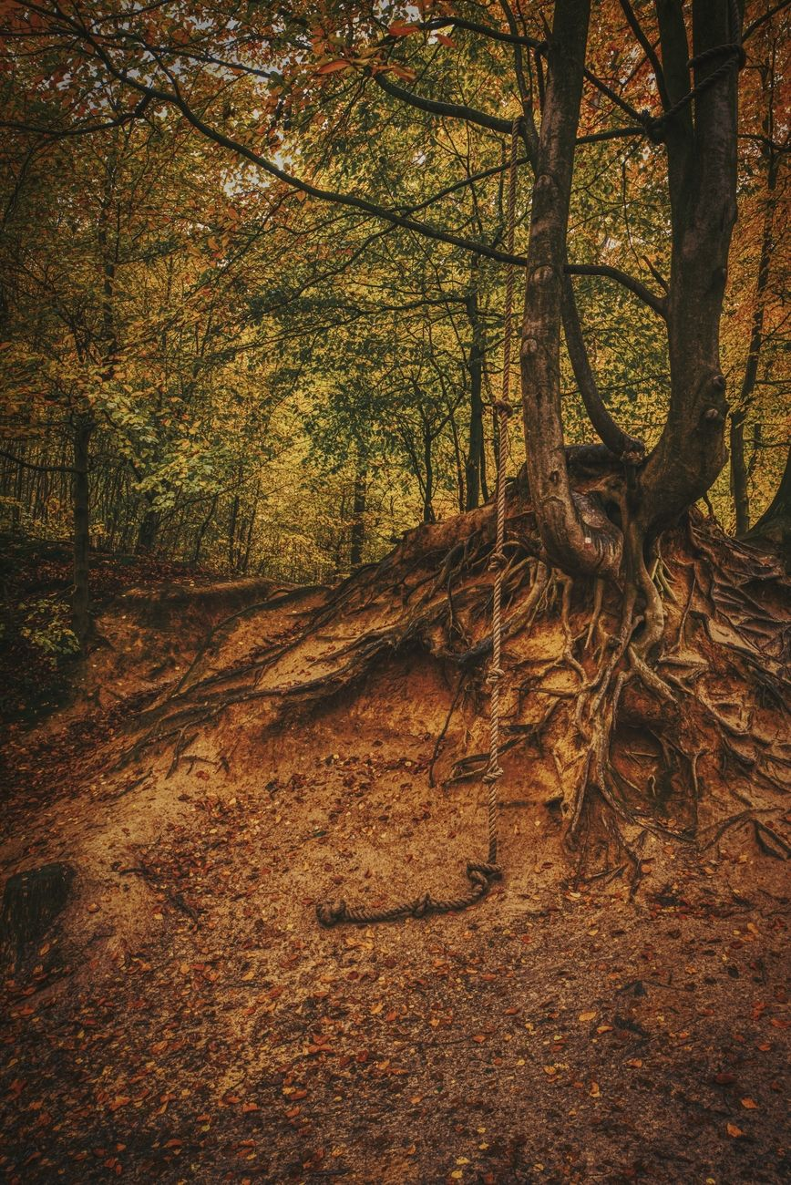 Autumn is a bit late here in Belgium. So, Inspired by Halloween i decided to take a few spooky forest shots.