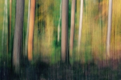 Had my crash course on intentional camera movement, or what we call «fine blurry art» :) ,from my friend @sander_grefte, here the first result of the beautiful automnal forest colors. #trees #autumn #forest #fallcolors #intentionalcameramovement #speuld