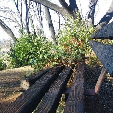 After wildfire nature takes over