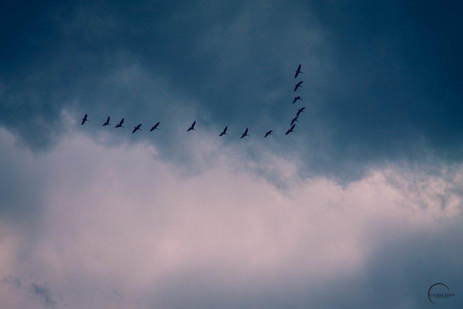 Caught a few shots of birds in flight