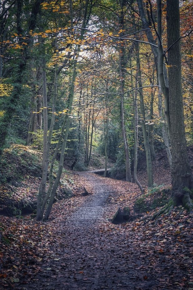 Path leading through an wooded gorge in autumn