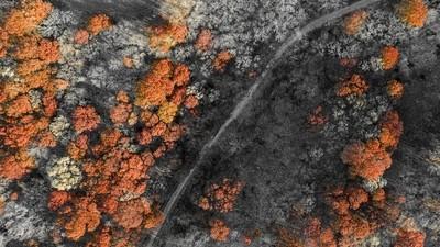 Autumn Overhead