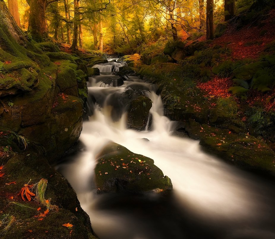 The Forest Stream