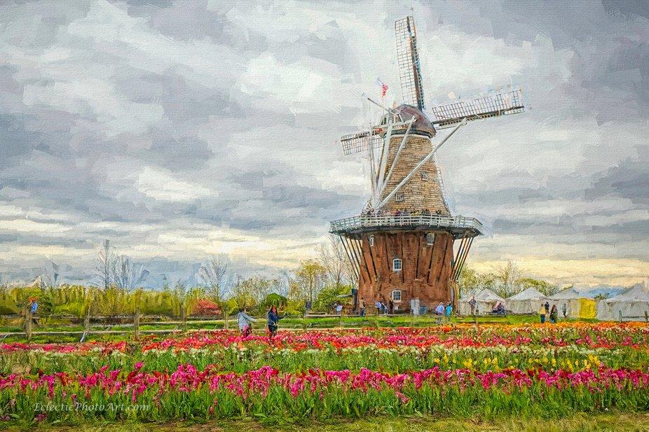 Annual tulip festival.