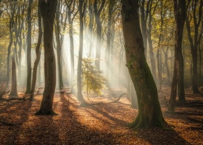 sunny morning in the forest.