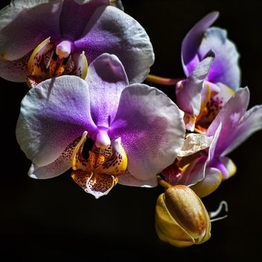 Vibrant Orchids NW