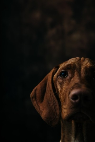 Stella. A 6 month portrait.