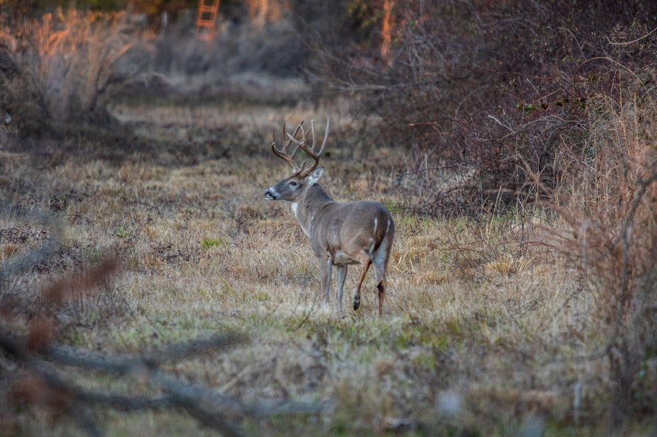 Fun day hanging out along a trail that I have seen a few nice bucks and after about 45 minutes ou...
