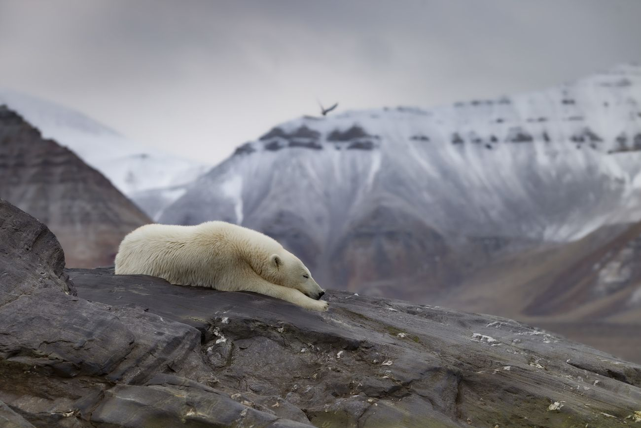 Celebrating Nature Photo Contest Winner