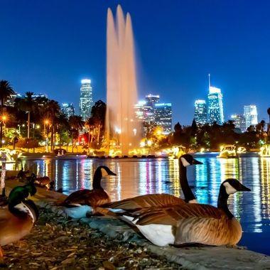 LA Night Echo Park City Scape