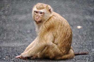 Monkey Hill_3