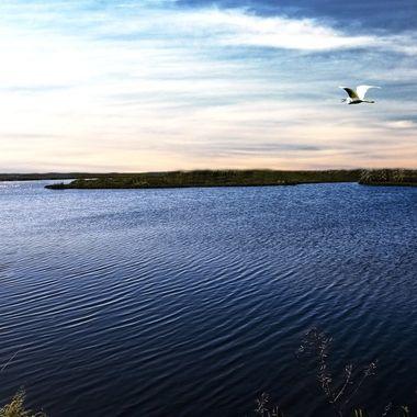 Lake Apopka NW