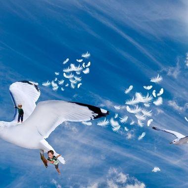 Magical Flight NW