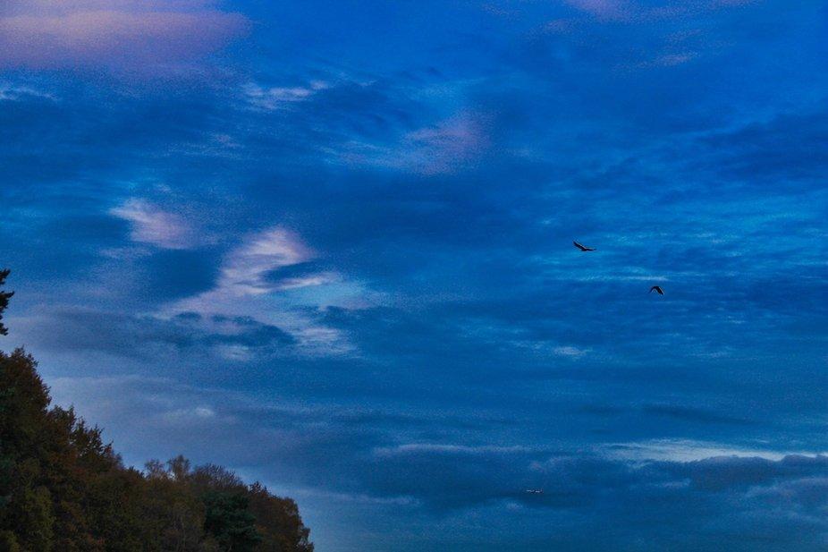Into the evening sky.