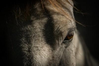 Wild Horse Eye
