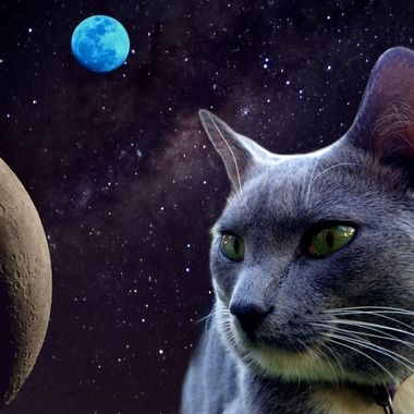 The Milkyway Cat in Space