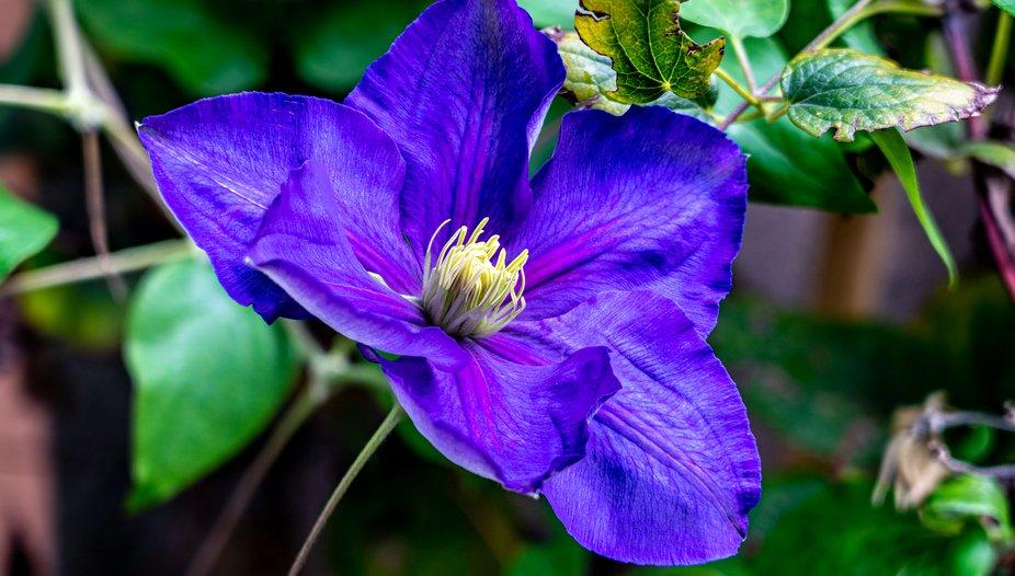 FS Flower