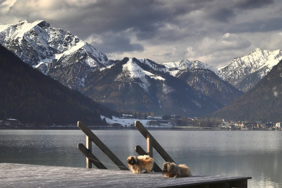 Two of our Pekinese terrors relaxing out on a swimming platform on the spectacular Achensee lake ...