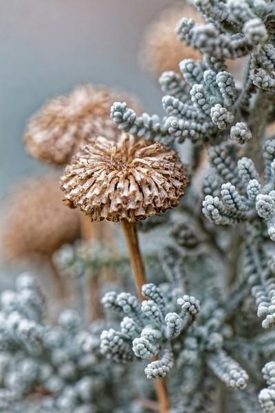 Floral Composition 001