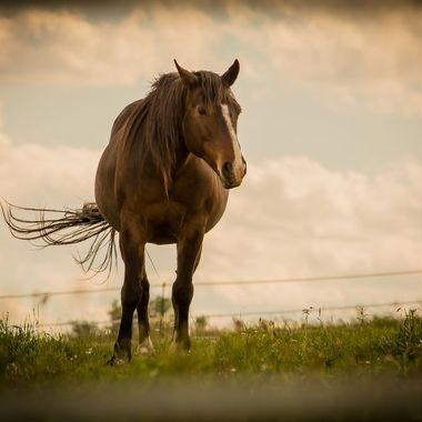 Wind Horse