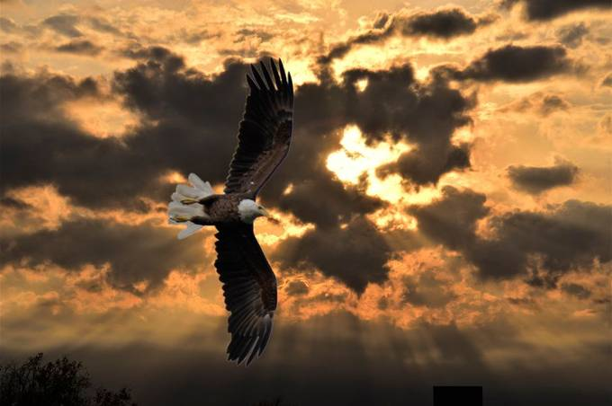 Sunset at Tilson Bay added the eagle