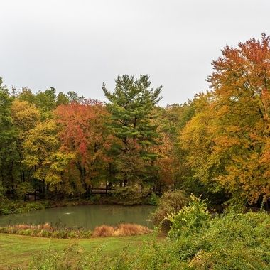 Fall colors at the backyard pond.
