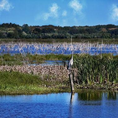 Lake Apopka Preserve NW