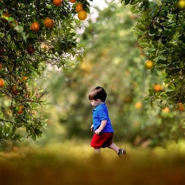 {Jax} In the Orange Orchard NW